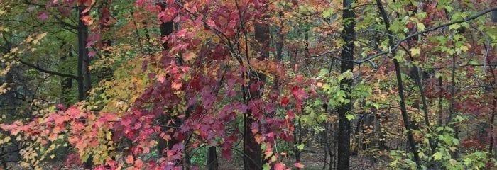 Greeting the Seasons
